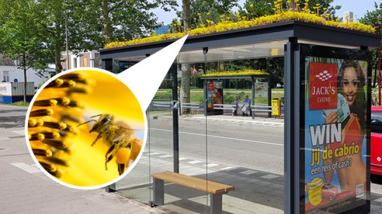 Pays-Bas : 300 abrisbus transformés en refuges pour abeilles